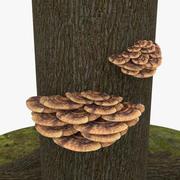 Bracket Fungus 3d model