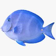 fish鱼 3d model