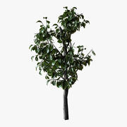 Planta pequena de Bush 3d model