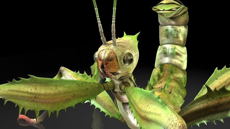 insects royalty-free 3d model - Preview no. 4