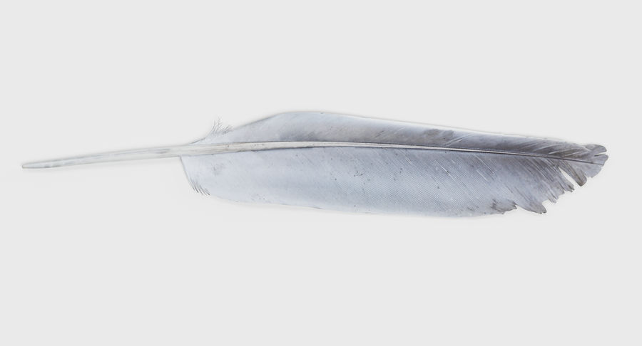 Bird Feather royalty-free 3d model - Preview no. 3