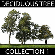 Collezione di alberi decidui 3d model