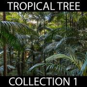 Kolekcja drzew tropikalnych 3d model