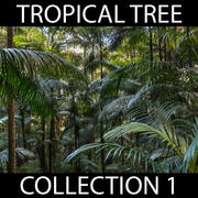 Tropical Tree Collection 3d model