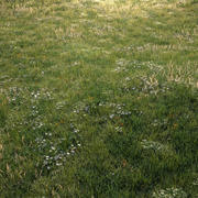 Grass Asset 01 _ Weide 3d model
