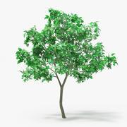 丁香树 3d model