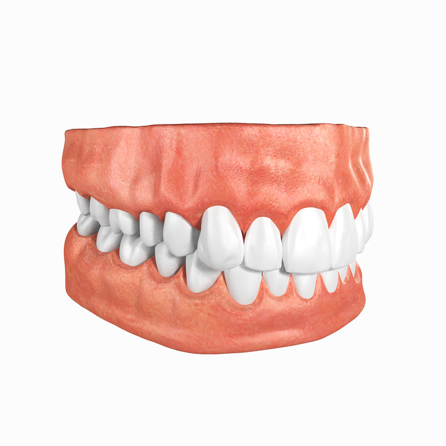 Human Teeth Anatomy royalty-free 3d model - Preview no. 2