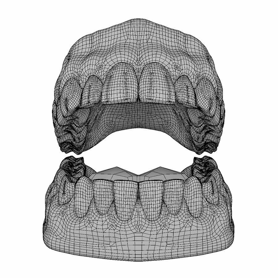 Human Teeth Anatomy royalty-free 3d model - Preview no. 8
