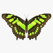 Malachiet vlinder 3d model