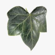 Ivy Leaf 3d model