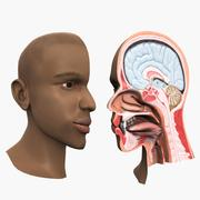 Head Anatomy 3d model