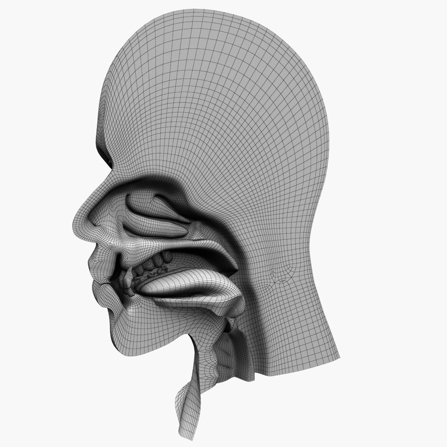 Hoofd anatomie royalty-free 3d model - Preview no. 9