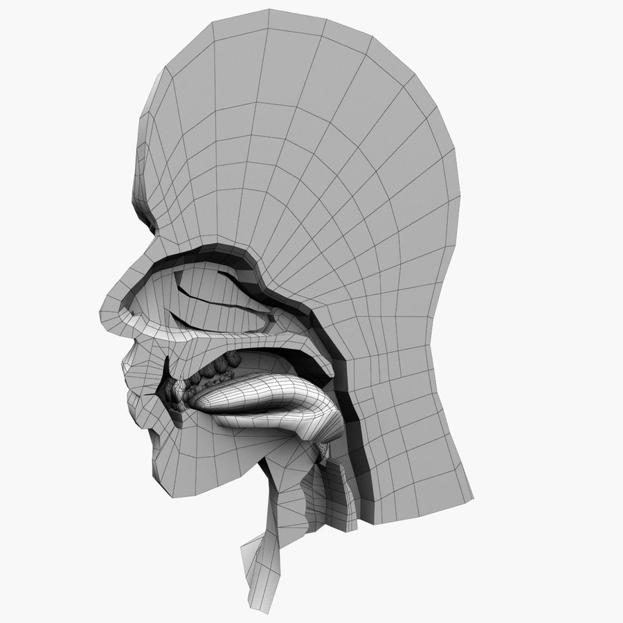 Head Anatomy royalty-free 3d model - Preview no. 10
