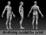 Modello anatomico 3d model