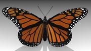Monarch kelebek 3d model