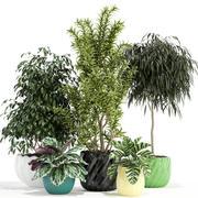 Plantencollectie 111 3d model