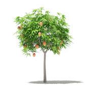 Albero di mango con frutti Modello 3D 1.7m 3d model