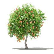 Albero di mango con frutti Modello 3D 2.7m 3d model