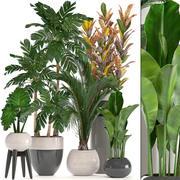 收集盆栽观赏植物 3d model