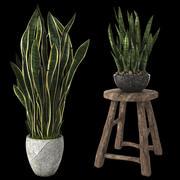 家庭用植物サンセベリア 3d model