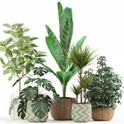 Colección de plantas 116 modelo 3d