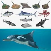 Fishs 3D模型集合3 3d model
