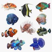 サンゴ魚3Dモデルコレクション3 3d model