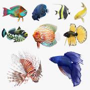 リギングされたサンゴ魚3Dモデルコレクション3 3d model