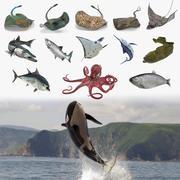 索具的鱼3D模型集合3 3d model
