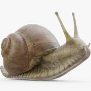 Snail (Rigged) 3d model