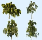 Pakiet animowanych drzew brzozy 4 3d model