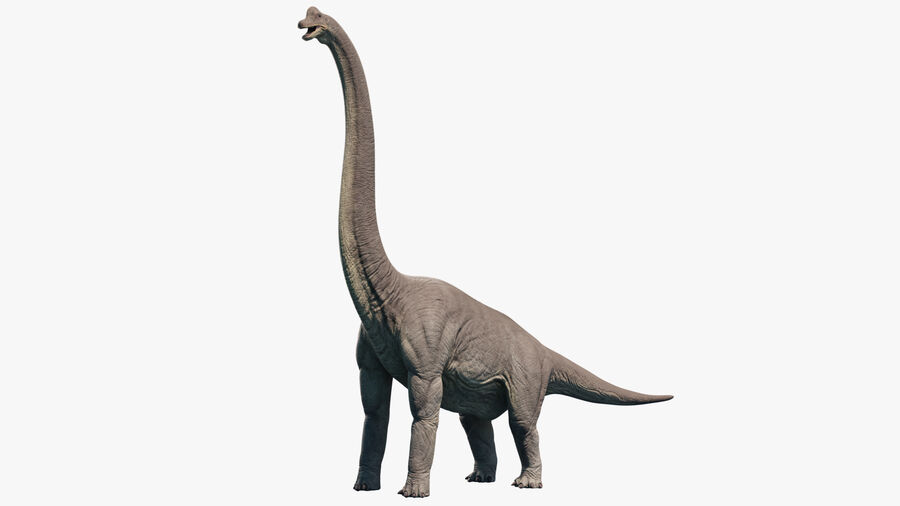 Brachiosaurus royalty-free 3d model - Preview no. 3