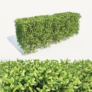 Buxus Sempervirens #1 hedge 3d model