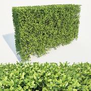 Buxus Sempervirens #2 hedge 3d model