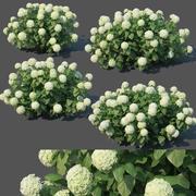 Hydrangea arborescens # 1. Annabelle V2 3d model