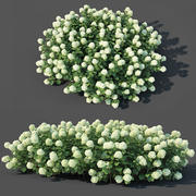 Hydrangea arborescens # 2. Customizable 3d model
