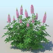 Lupines (10 items) 3d model