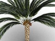 棕榈树与日期 3d model