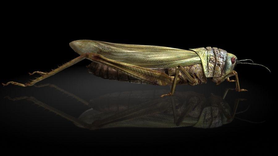 szarańcza / owady royalty-free 3d model - Preview no. 1