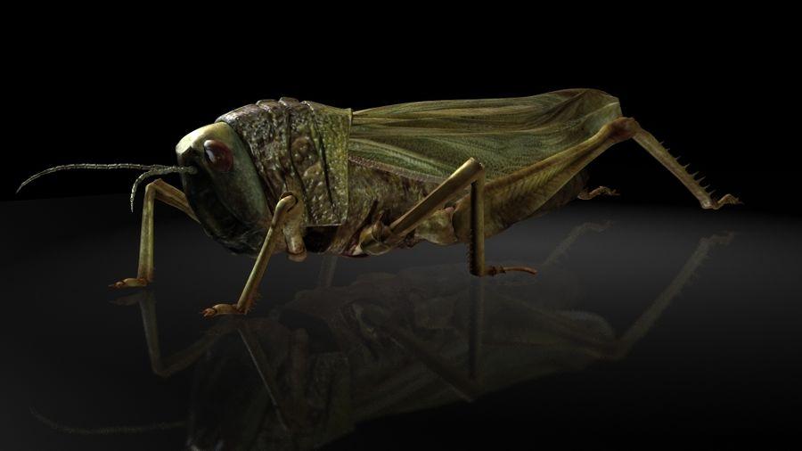 szarańcza / owady royalty-free 3d model - Preview no. 7