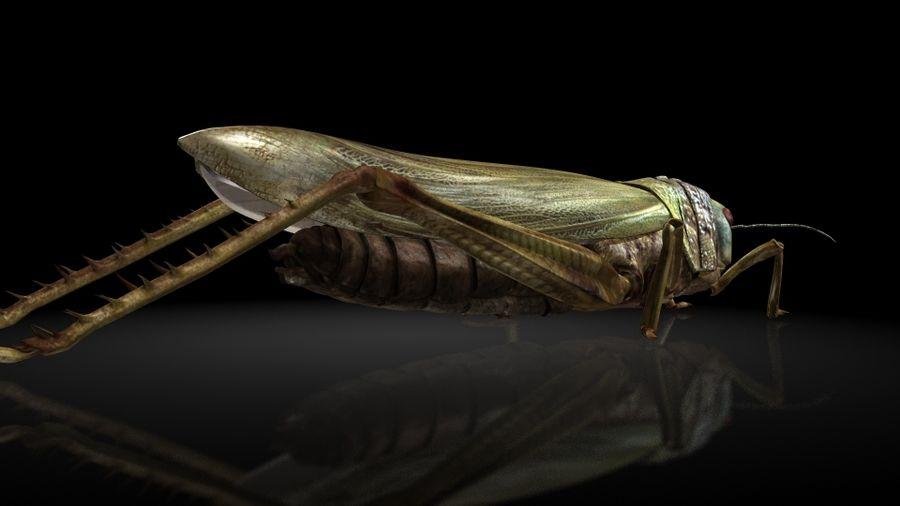 szarańcza / owady royalty-free 3d model - Preview no. 5