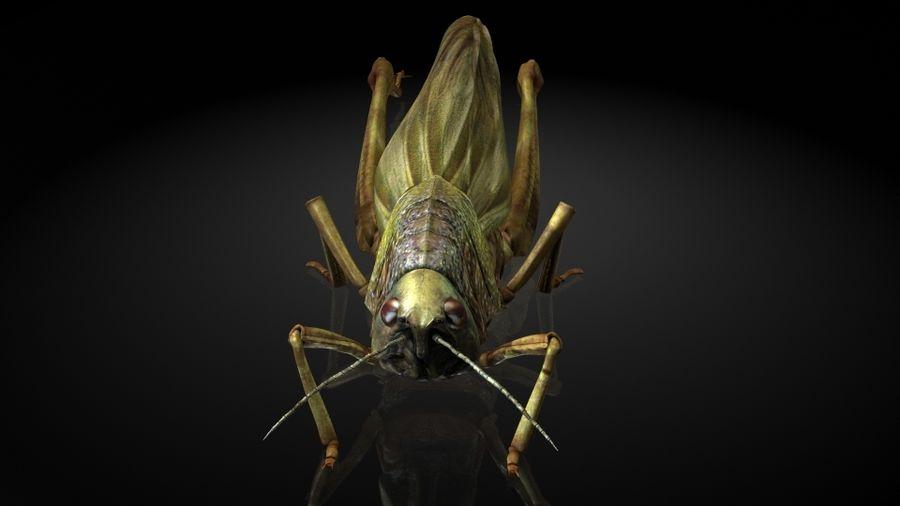 szarańcza / owady royalty-free 3d model - Preview no. 6