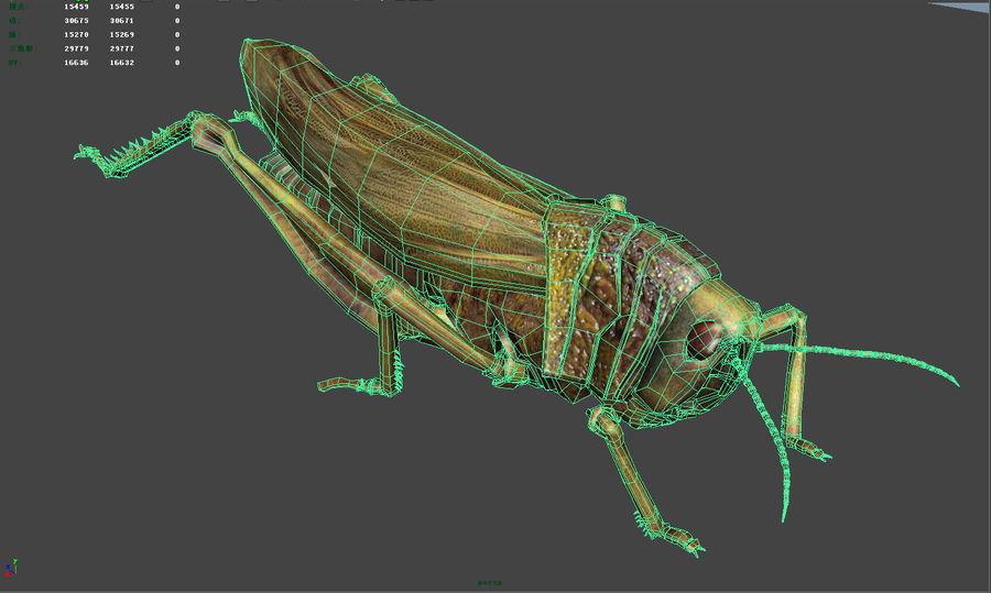 szarańcza / owady royalty-free 3d model - Preview no. 8