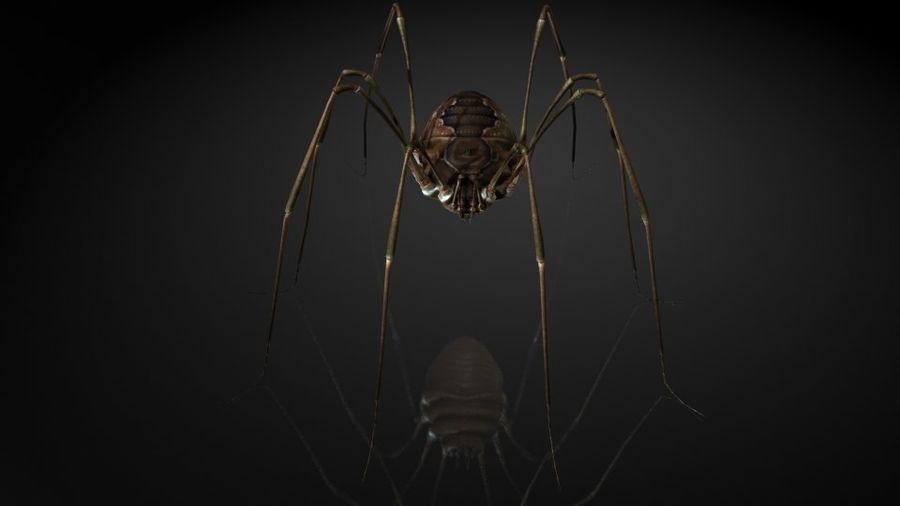 거미류 / 거미 / 곤충 royalty-free 3d model - Preview no. 4