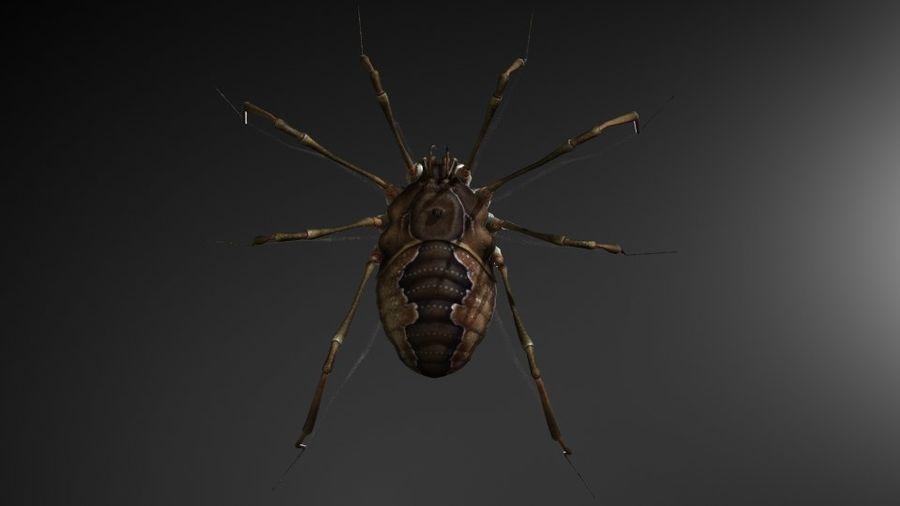 クモ/クモ/昆虫 royalty-free 3d model - Preview no. 3