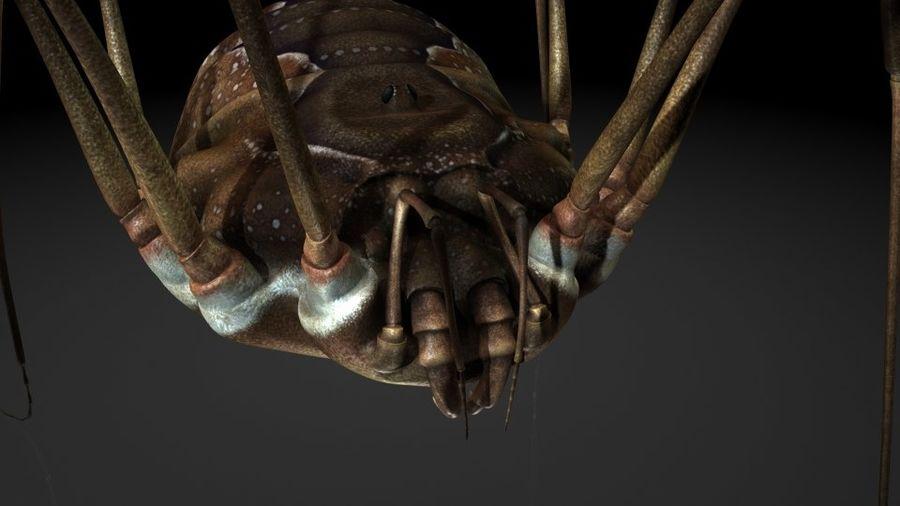 거미류 / 거미 / 곤충 royalty-free 3d model - Preview no. 2