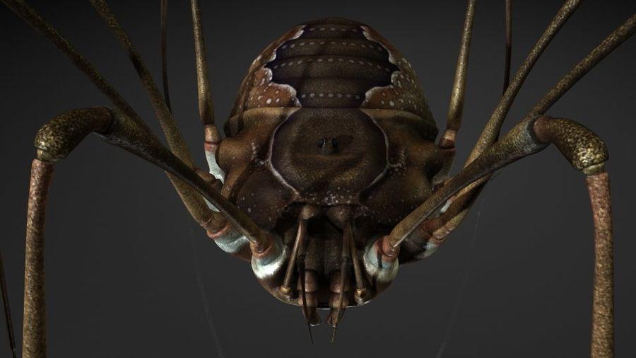 거미류 / 거미 / 곤충 royalty-free 3d model - Preview no. 6