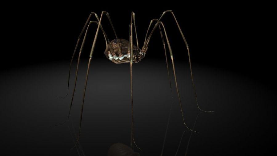 거미류 / 거미 / 곤충 royalty-free 3d model - Preview no. 1