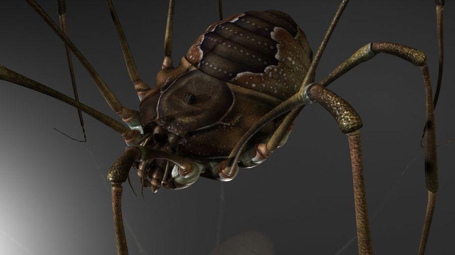 거미류 / 거미 / 곤충 royalty-free 3d model - Preview no. 5