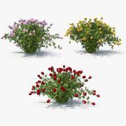 Rose bush collection 3d model